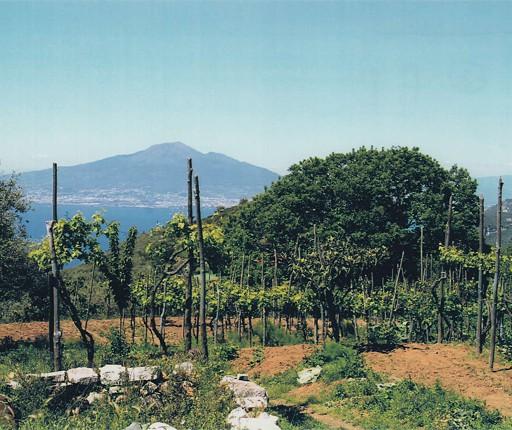 fattoria-didattica-vico-equense-04